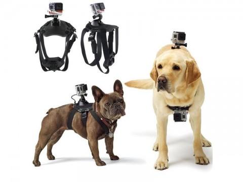 Držiak kamery 4L na psa