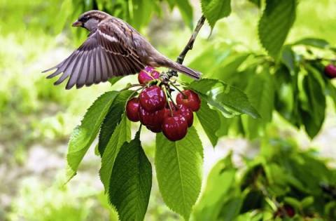 Odpudzovač vtákov Gardigo Solar Bird Deterrent 60091